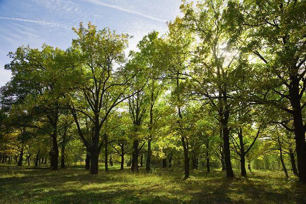 जानें कैसे प्रदूषण हमें बना रहा है बीमार, सघन वनरोपण से किया जा सकता है प्रदूषण नियंत्रित-