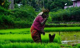 भारतीय कृषि व्यवस्था : ऐतिहासिक परिप्रेक्ष्य एवं भविष्य की योजना