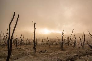 नकारने से और नासूर बन जाएगी मौसम परिवर्तन की समस्या
